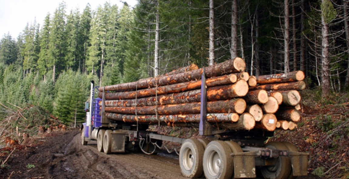 Warm winters are a threat for the timber industry in Scandinavia